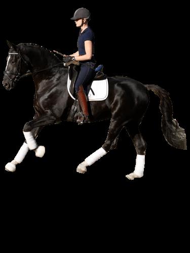horse allenati bene